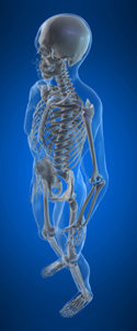 3d rendered anatomy illustration of a human skeleton
